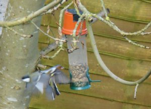 change-over at the feeder