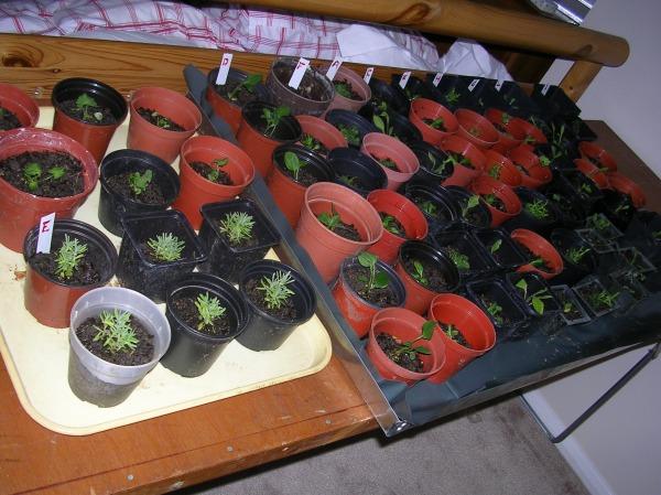 New plants 001